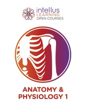 Intellus Open Course for Anatomy and Physiology - 1st Semester (Six Months Access)