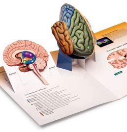 Three-Dimensional Brain by Worth Publishers - First Edition, 2012 from Macmillan Student Store